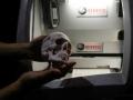 3D Printed skull model