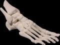 3D Printed foot model